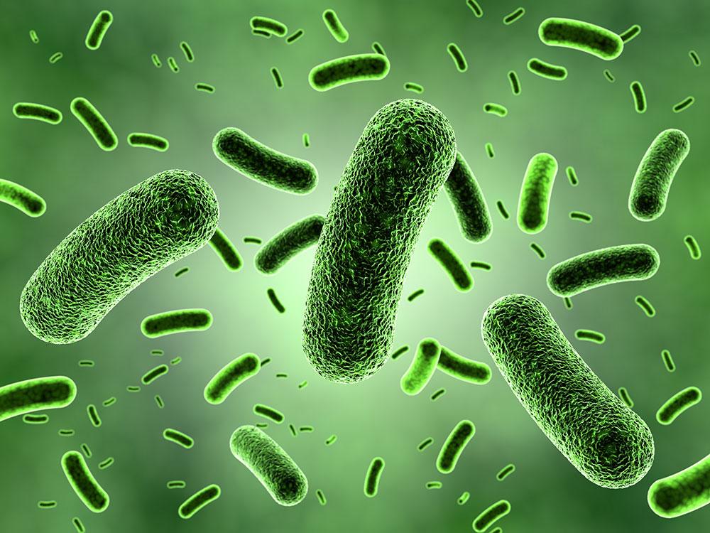 Fluorescent Quantitative Pcr Detection Mycobacterium